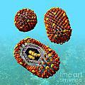 Influenza Virus Scene 1 by Russell Kightley