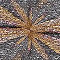 Influx by Tim Allen
