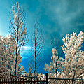 Infrared Summer Storm by Steve Harrington