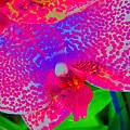 Inner Beauty - Orchid - Gardens by Susan Carella