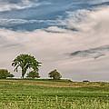 Innisfree Tree 15203c by Guy Whiteley