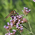 Insect And Flower by Alan Hutchins
