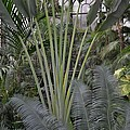 Inside Jungle by Wanda J King