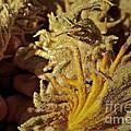 Inside The Sago Palm by Gwyn Newcombe