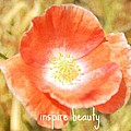 Inspire Beauty Poppy Floral by P S