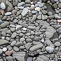 Intertidal Shore by Ted Kinsman