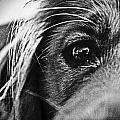 Into Her Eyes by Jacqueline Valenzuela