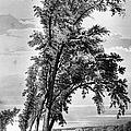 Iowa: Council Bluffs, 1855 by Granger
