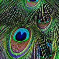Iridescent Eyes by Bel Menpes