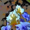 Iris 41 by Pamela Cooper