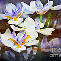 Iris Art by Kaye Menner