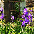 Iris At The Gate -1 by Alan Hausenflock