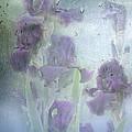 Iris In The Spring Rain by Diane Schuster