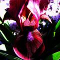 Iris Inner Beauty by Ms Judi