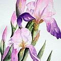 Iris by Lyn DeLano