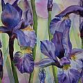 Iris by Ruth Kamenev