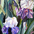 Irises by Blooming Originals A Publishing Creation of AngelArts