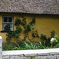 Irish Cottage by Bonnie Myszka