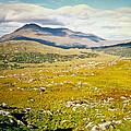 Irish Landscape 101 by Douglas Barnett
