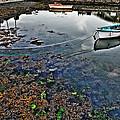 Irish Low Tide by Patrick  Flynn