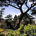 Irish National Botanic Gardens, Dublin by The Irish Image Collection