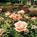 Irish National War Memorial Gardens by The Irish Image Collection
