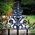 Iron Gate by Perry Webster