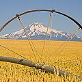 Irrigation Pipe In Wheat Field With by Craig Tuttle