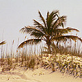 Island Sand Dune by Carol Steele