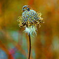 Isolated Locoweed by Bill Tiepelman
