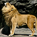 It's Good To Be The King by Mitch Shindelbower