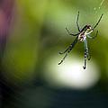 Itsy Bitsy Spider by Edward Kreis