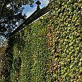 Ivy Covered Chapel by John Greim