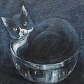 Jack-in-the-bowl by Mo