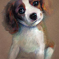 Jack Russell Terrier Dog by Ylli Haruni