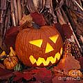Jack's Grim Grin - Fm000065 by Daniel Dempster
