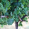 Jackson Triggs Winery 2 by Cyryn Fyrcyd