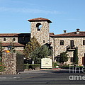 Jacuzzi Family Vineyards - Sonoma California - 5d19322 by Wingsdomain Art and Photography
