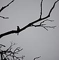 Jammer Bird Silhouette 1 by First Star Art