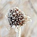 January Sunflower by John Girt