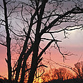 January Sunrise 3 by Teresa Mucha
