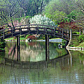 Japanese Bridge In Springtime by Greg Matchick