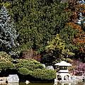 Japanese Friendship Garden . San Jose California . 7d12785 by Wingsdomain Art and Photography