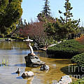 Japanese Friendship Garden . San Jose California . 7d12793 by Wingsdomain Art and Photography
