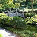 Japanese Garden Bridge by Lynnette Johns