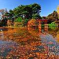 Japanese Garden Brooklyn Botanic Garden by Mark Gilman