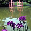 Japanese Garden Brooklyn New York by Mark Gilman