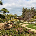 Japanese Garden by Caroline Lomeli