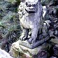 Japanese Garden Lion Dog Statue 1 by Elaine Plesser