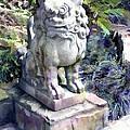 Japanese Garden Lion Dog Statue 2 by Elaine Plesser